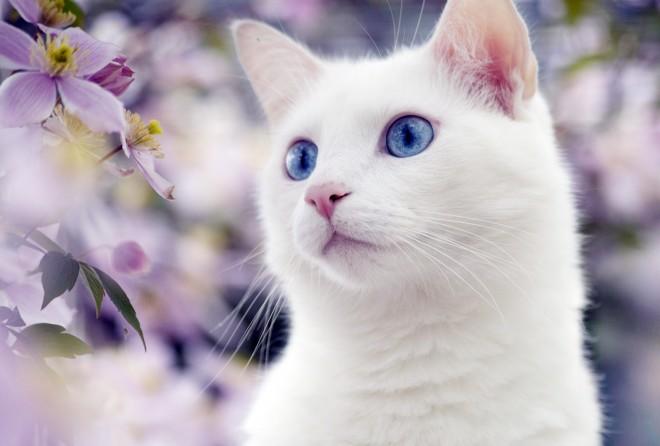 Картинки с котами с голубыми глазами