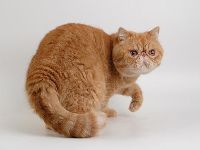 Назвать кота сфинкса