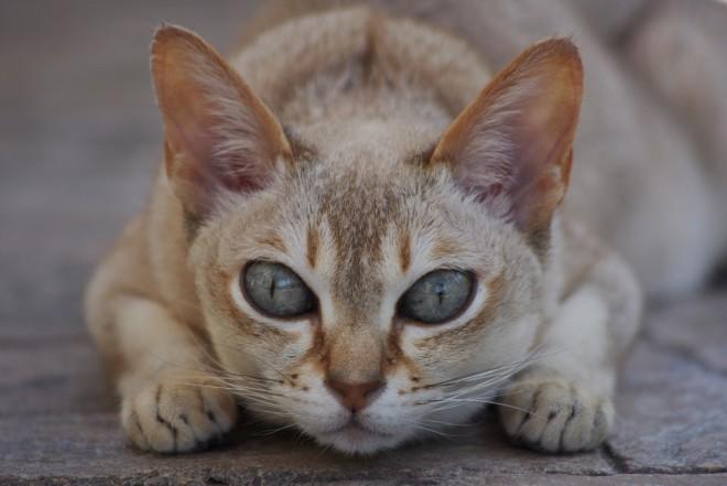 Японски клички котов мальчиков