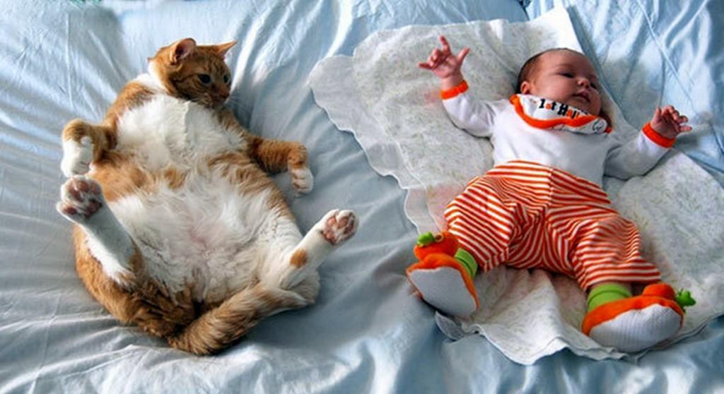 Картинки по запросу дети и кошки