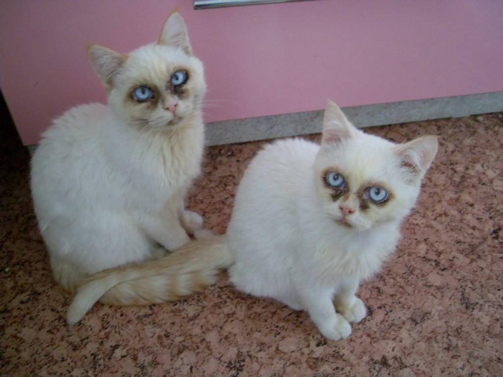 Гноятся глазки у котенка чем лечить в домашних условиях 13