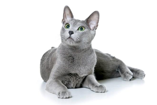 Имена котов томов