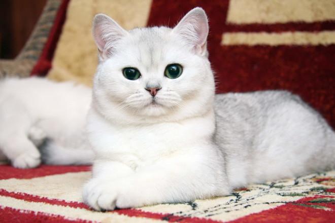 Как назвать кота русские имена
